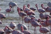Walvis Bay - Flamingos in der Lagune