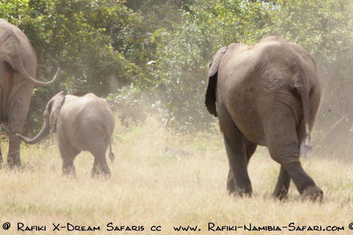 Elefanten im Bwabwata Nationalpark - Namibia