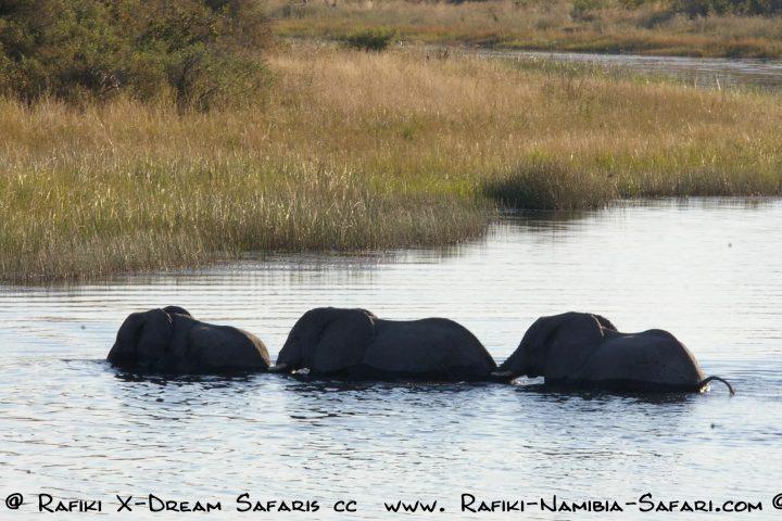 Elefanten beim Durchqueren des Kwando - Mudumunationalpark - Namibia