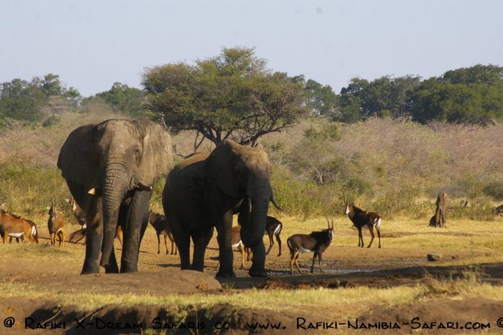 Elefanten im Mahango Nationalpark - Namibia