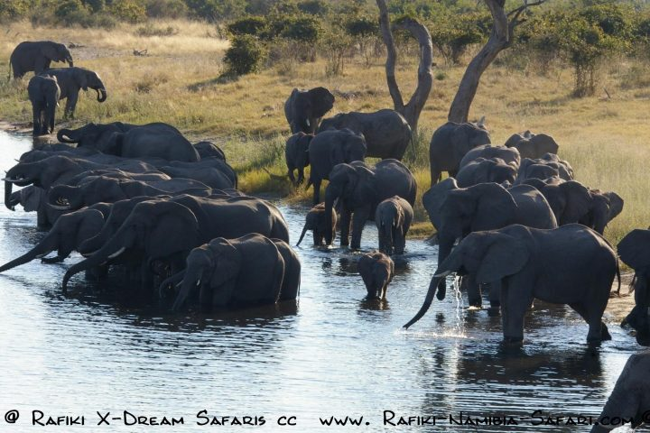 Caprivi - Mudumu Nationalpark Elefantenherde