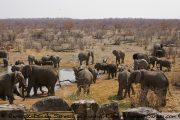 Etosha Nationalpark - Elefantengruppe am Wasserloch