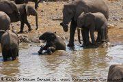 Etosha Nationalpark Elefanten an der Wasserstelle