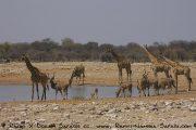 Etosha Nationalpark- Wasserloch