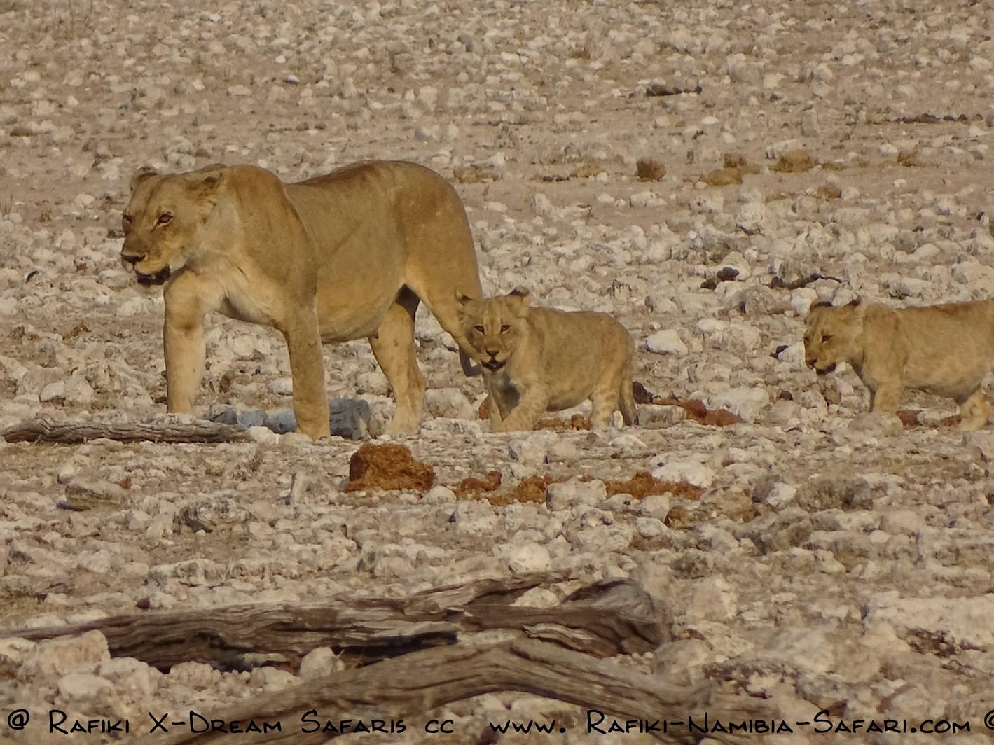 Namibia Classic –            Camping und Lodge Safari      – 14 Tage