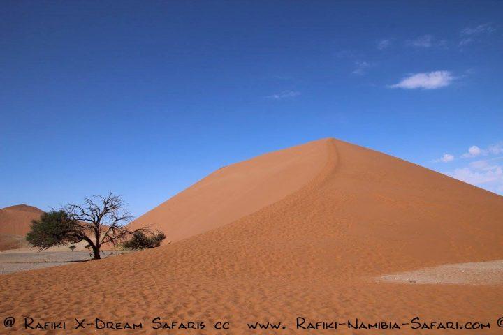 Düne 45 bei Sossusvlei - Namibia