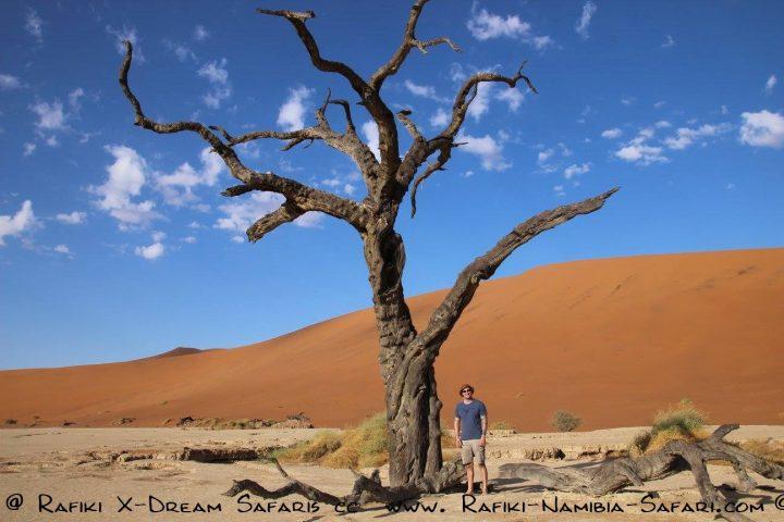 Tausend Jahre alte Bäume im Death Valley im Sossusvlei