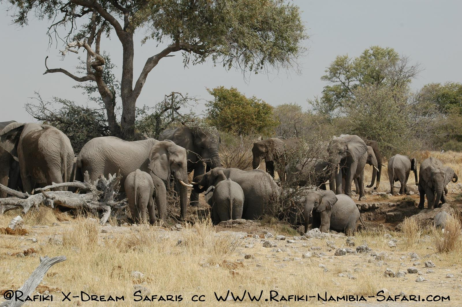 Elefantenherde im Caprivi - Namibia