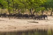 Elefantenherde am Horseshoe - Bwabwata Nationalpark - Namibia