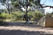 Elefant auf der Campsite im Bwabwata Nationalpark - Caprivi -Namibia