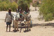 Donkey Car -Namibia