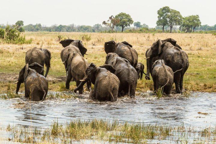Elefanten im Caprivi - Namibia