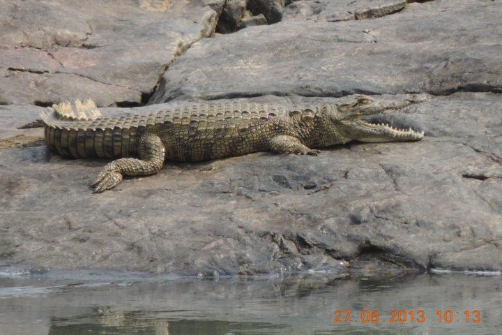 Krokodil an den Epupa Wasserfällen