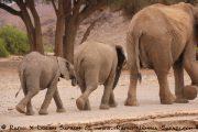 Elefantenfamilie im Hoanib