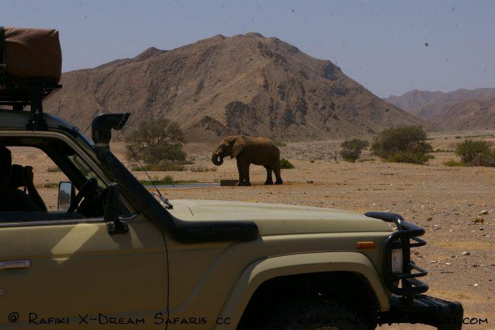 Im Hoanib - Wüstenelefant an der Wasserstelle
