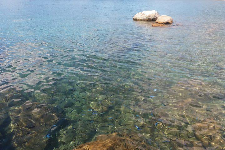 kristallklares Wasser mit Zierfischen am Malawisee