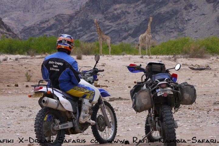 Motorräder im Kaokoveld - Giraffen