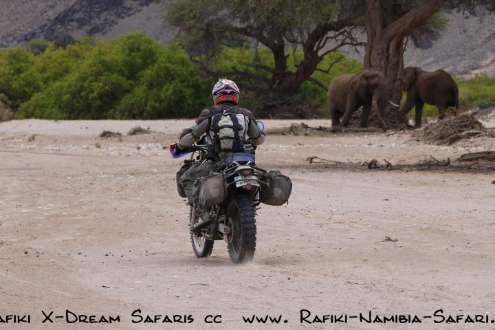 Motorradfahrer im Kaokoveld bei Elefanten