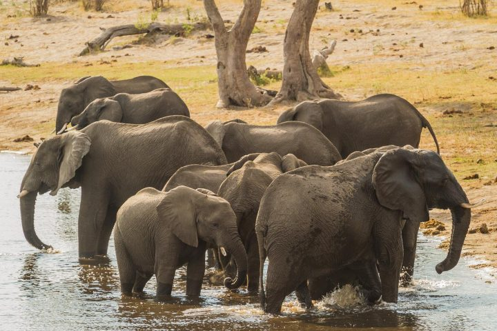 Elefanten im Mudumu Nationalpark - Namibia