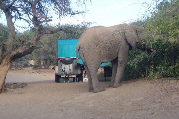 Elefantenbesuch in Puros im Kaokoveld