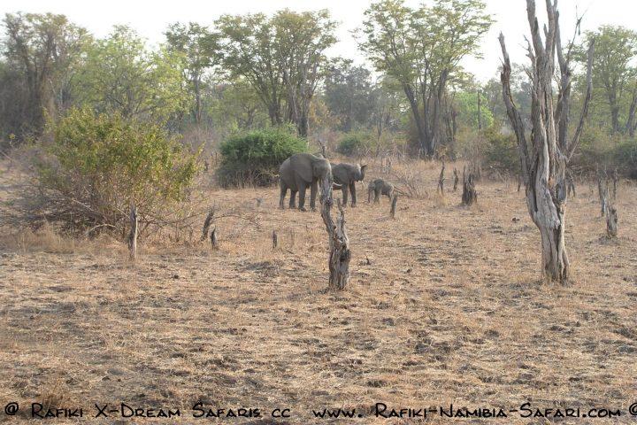 Elefanten im South Luangwa Park - Sambia