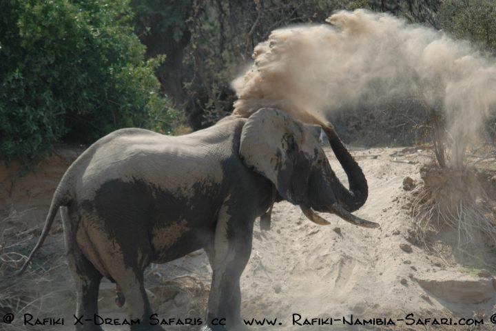 Wüstenelefant im staubigen Kaokoveld