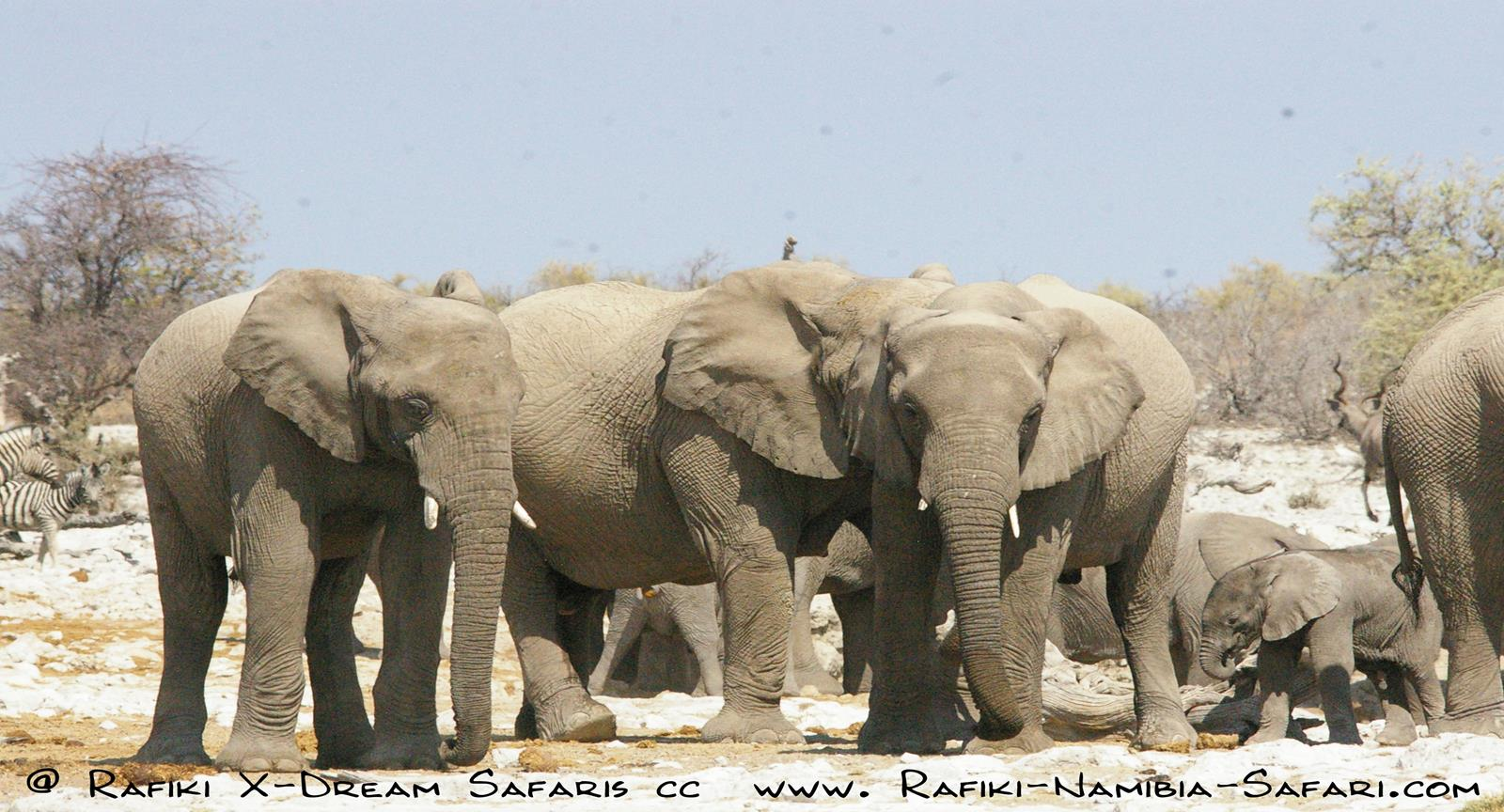 Namibia Classic –            Camping Safari      – 14 Tage