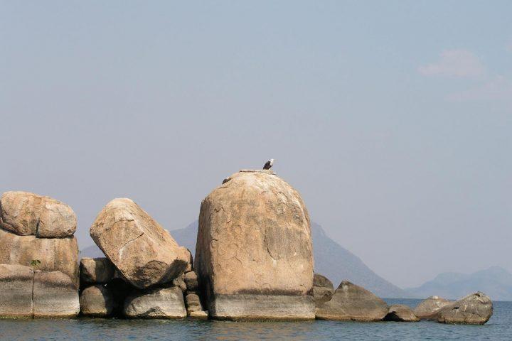 Weisskopfsee Adler am Malawi See